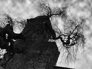 black and white image of old house with gnarled tree